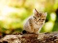Cute Kitten Outdoor In Nature
