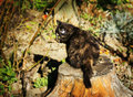 Cute kitten outdoors fluffy black is sitting on a stub Royalty Free Stock Photography