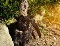 Cute kitten outdoors fluffy black is sitting under fir tree Stock Photos