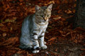 Cute kitten outdoors sitting on autumn leaves Royalty Free Stock Photography