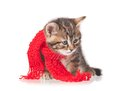 Cute kitten sick with a scarf tied round a neck isolated on white background Royalty Free Stock Photo