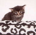 Cute kitten sitting down Stock Images