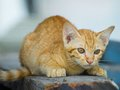 Cute kitten sitting down to look carefully. Royalty Free Stock Photo