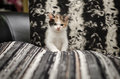 Cute kitten sitting very tri colours Royalty Free Stock Image