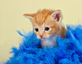 Cute kitten surrounded with blue feathers Royalty Free Stock Photos