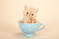 Cute kitten in tea pot Stock Images