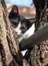Cute kitten on the tree Royalty Free Stock Photo