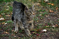Cute kitten walks outdoors looking up Royalty Free Stock Photography