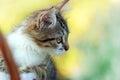Cute kitten watching its prey Stock Photography