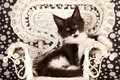 Cute kitten on wicker chair Royalty Free Stock Photography