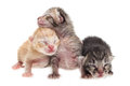 Cute kittens background new born on white Royalty Free Stock Photos