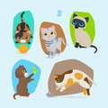 Cute kittens isolated illustration set