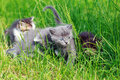 Cute kittens playing in the grass Royalty Free Stock Photo