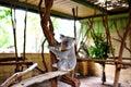Cute koala in australia national park Stock Images