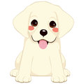 Cute labrador puppy white golden retriever illustration Stock Images