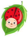 Cute ladybird Stock Photo
