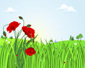 Cute landscape with poppies. Stock Images