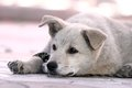 Cute lazy doggy resting in the shadow at noon Royalty Free Stock Photography