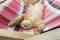 Cute little baby cat /kitty/ kitten play on Folding beds Royalty Free Stock Photo