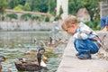 Cute little boy feeding ducks Royalty Free Stock Photo