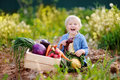 Cute little boy holding fresh organic beet in domestic garden Royalty Free Stock Photo