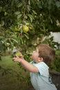 Cute little boy picking fruit from tree Stock Photo