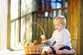 Cute little boy picking mushroom in basket Royalty Free Stock Photo