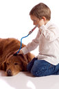 Cute little boy playing veterinary with his dog Stock Photos