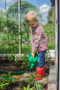 Cute little boy watering vegetables with watering can. Garden. Greenhouse Royalty Free Stock Photo