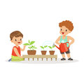 Cute little boys caring for plants during lesson of botany in kindergarten cartoon vector Illustration