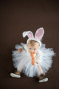 Cute little bunny with carrot Royalty Free Stock Photo