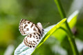 Cute little  butterfly on green leaf Royalty Free Stock Photo