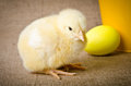 Cute little chicks and easter egg Stock Image
