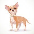 Cute little chihuahua dog vector illustration isolated on white background Stock Photo