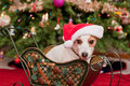Cute Little Dog with Christmas Hat Royalty Free Stock Photography