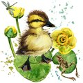 Cute little duckling. yellow water lily watercolor background. Royalty Free Stock Photo
