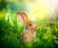 Cute little easter bunny rabbit art design of in the meadow Stock Images