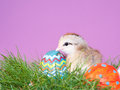 Cute little Easter chick next to Easter eggs Stock Photography