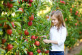 Cute little girl picking apples in apple tree orchard Royalty Free Stock Photo