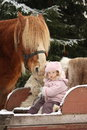 Cute little girl sitting in the sledges and big palomino draught Royalty Free Stock Photo