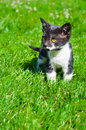 Cute little kitten portrait of a in the grass Stock Photo