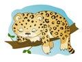 Cute little leopard dozing