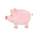 Cute little pig vector illustration of on white background Stock Photos