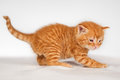 Cute little red hair kitten over white background Royalty Free Stock Photography