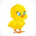 Cute little yellow cartoon chicken isolated on a white background Stock Image