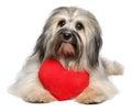 Carino amante cane cuore