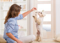 Cute maltese standing and fluffy young puppy on hind legs Royalty Free Stock Photos