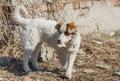 Cute mixed breed stray puppy holding bone Royalty Free Stock Photography