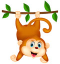 Cute monkey cartoon hanging illustration of Stock Images