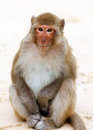 Cute monkey curiously sitting on the beach in Vietnam Royalty Free Stock Photo